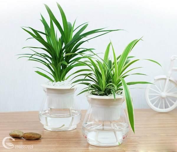 thiết kế nội thất cây phong thủy tốt cho sức khỏe